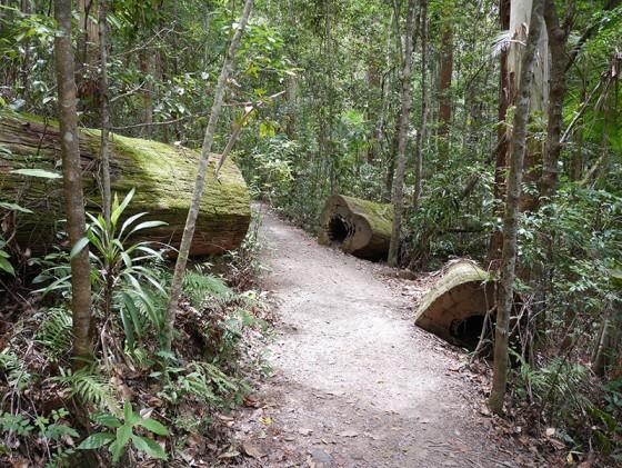 Kondalilla National Park Sunshine Coast Hinterland