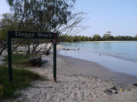 2014/02/13 Doggy Beach Noosa