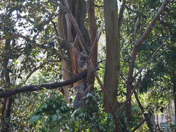 2014/03/16 David Fleay Wildlife Park