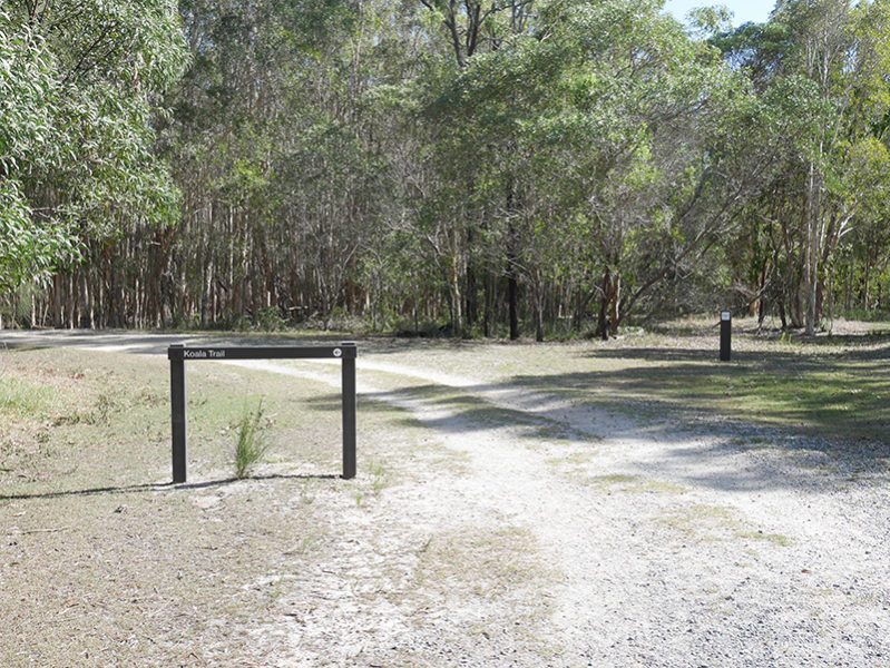 クーンババ国立公園でコアラに会える