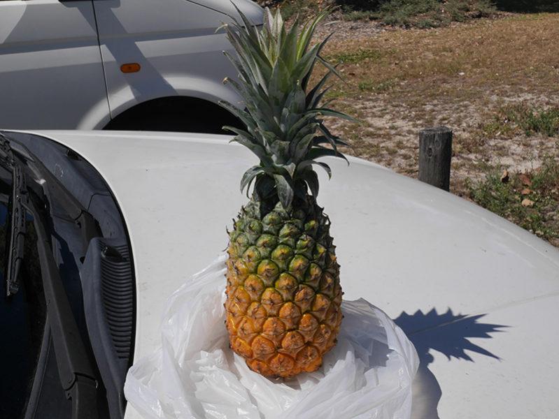 キングスクリフのフリマでパイナップル$2.5