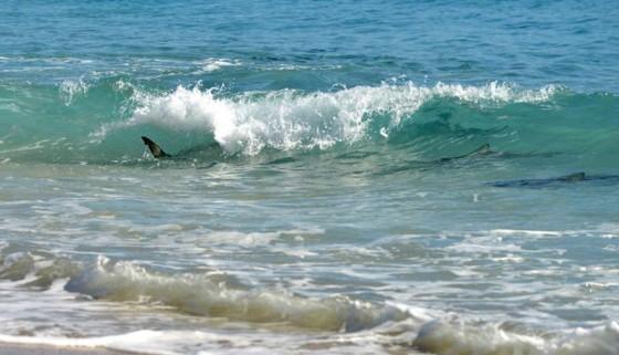 鮫が岸まで