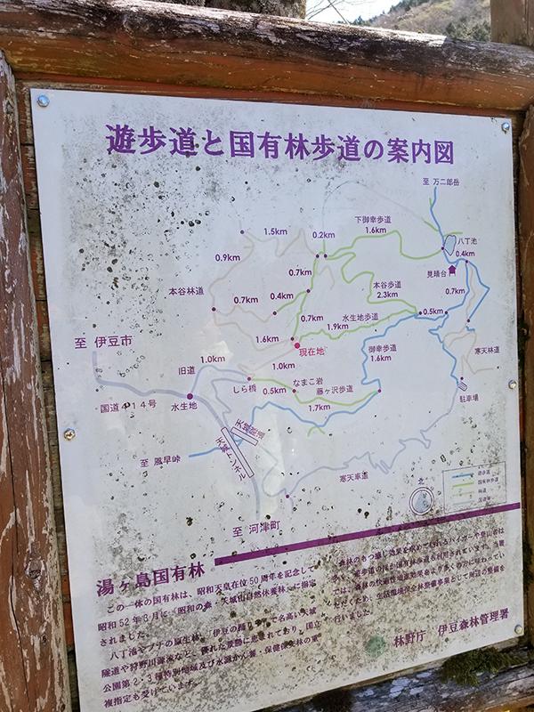 八丁池(伊豆天城)へ